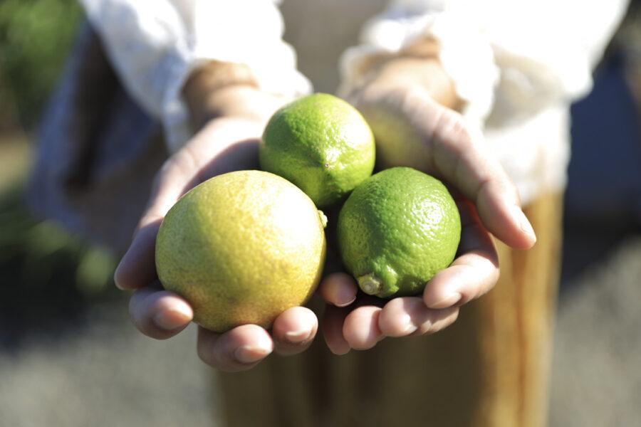 瀬戸内ゆうき農場様レモン農園撮影